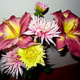 Dahlias & Day Lillies