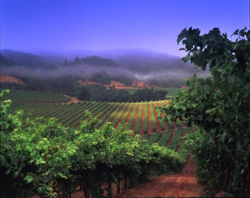Frei Brothers Reserve Vineyard at Dusk