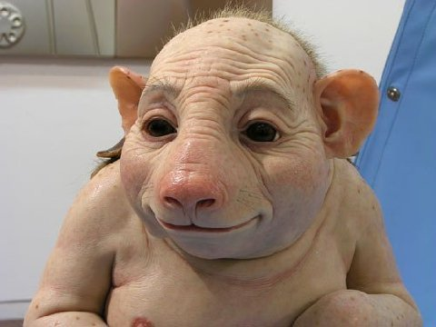 Swine flu 2