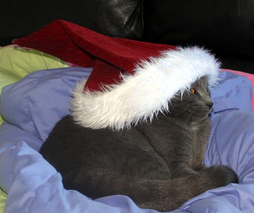 Merry Xmas Fat Gray Cat