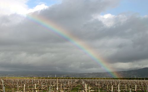 Rainbow So Cpast Vineyards