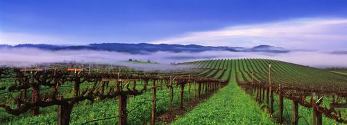 Frei Brothers Reserve Vineyard1