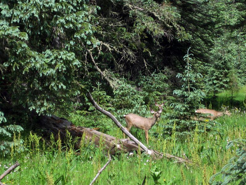 191 Deer