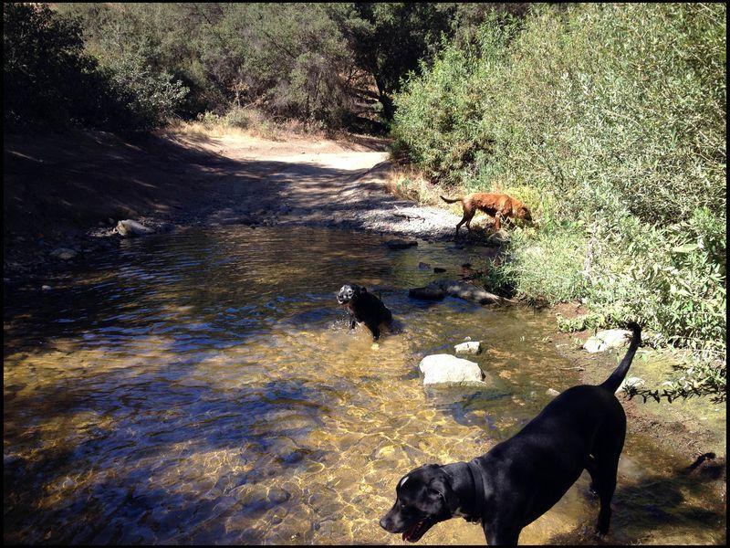 Dogs creek