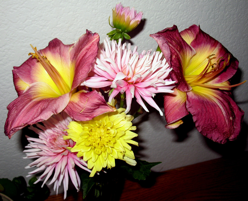 Dahlias_day_lillies