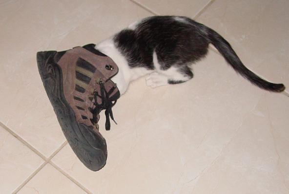 Leo_shoe